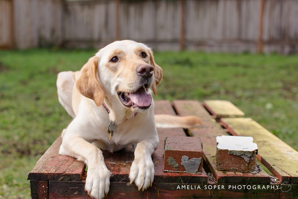 LifeStylePetPhotography_SoperPhotography_006
