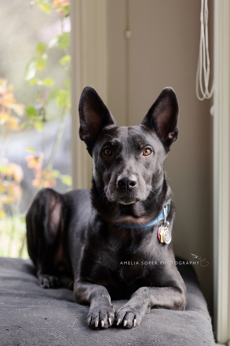 LifeStylePetPhotography_SoperPhotography_016