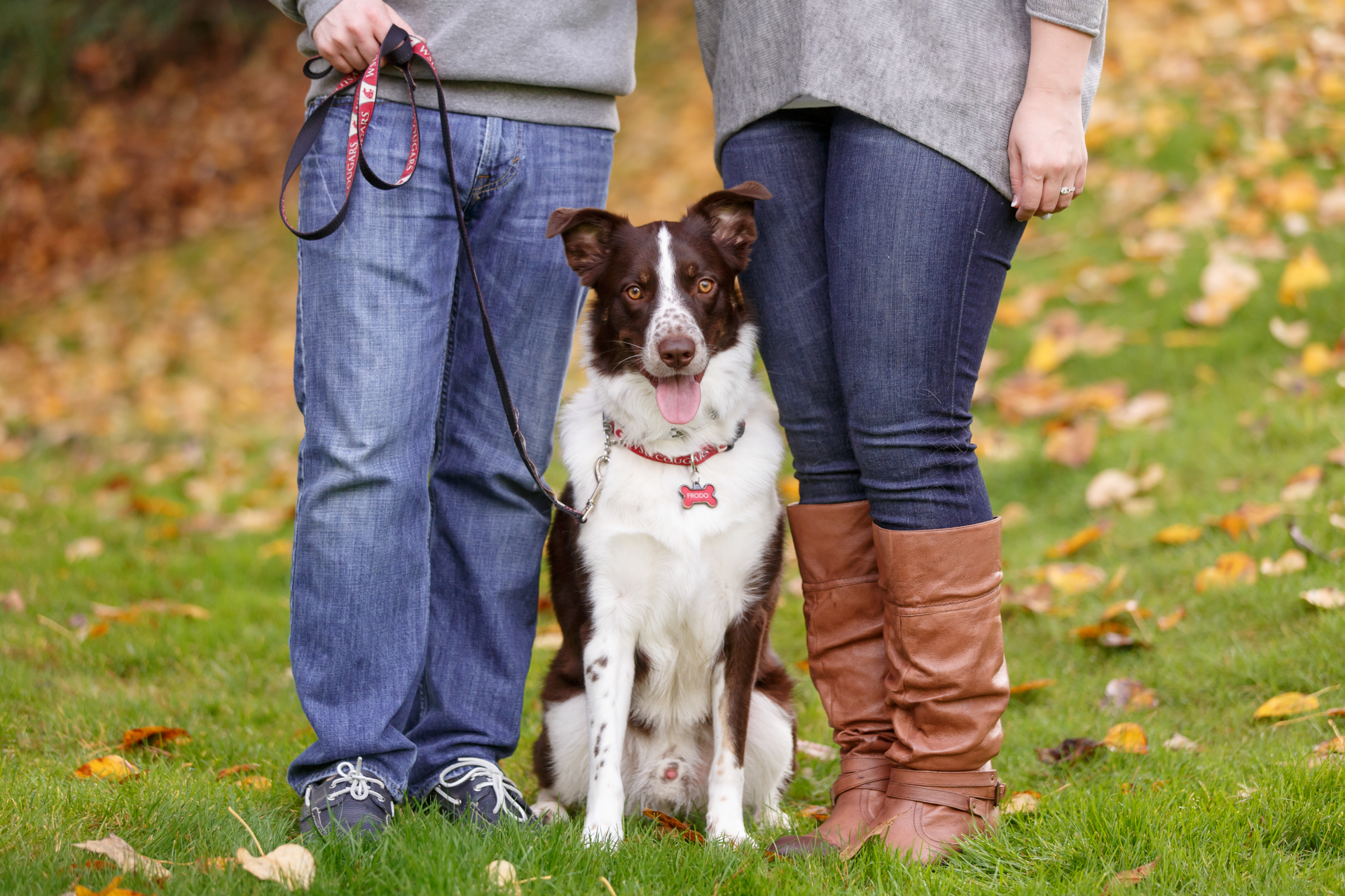 cattle-dog-mix-with-couple