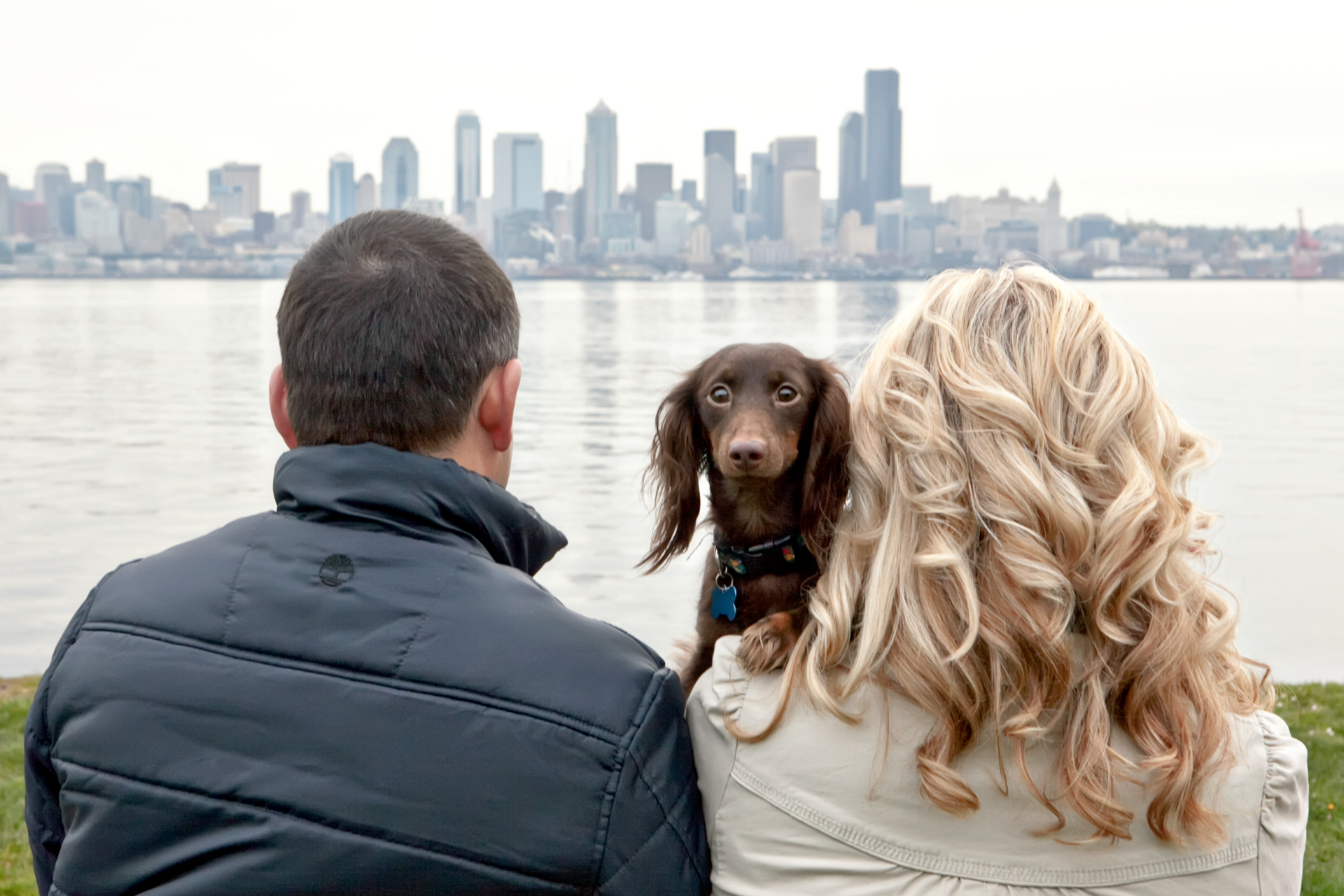 long-haired-dachshund-seattle