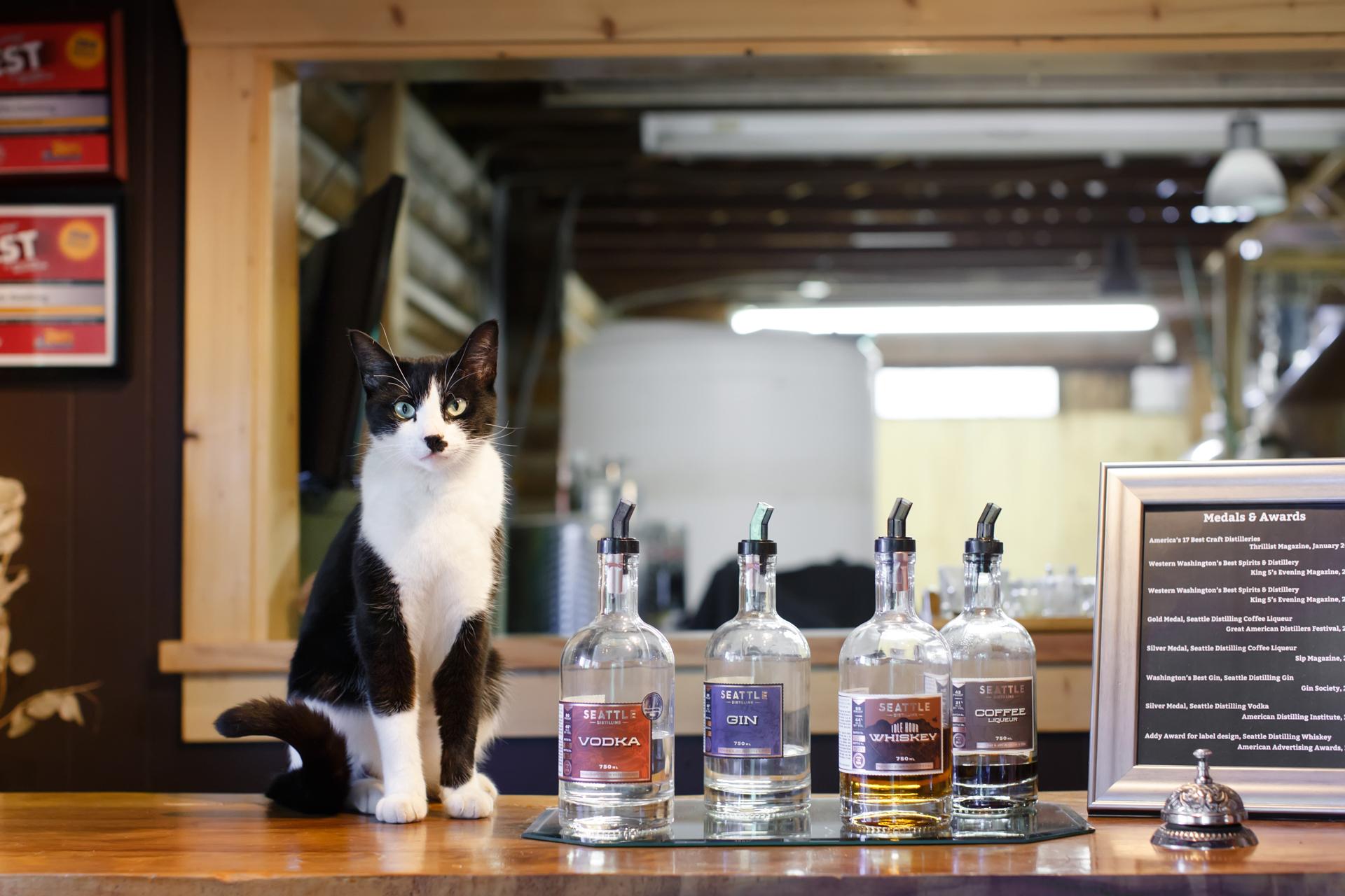 tuxedo-cat-in-seattle-distillery