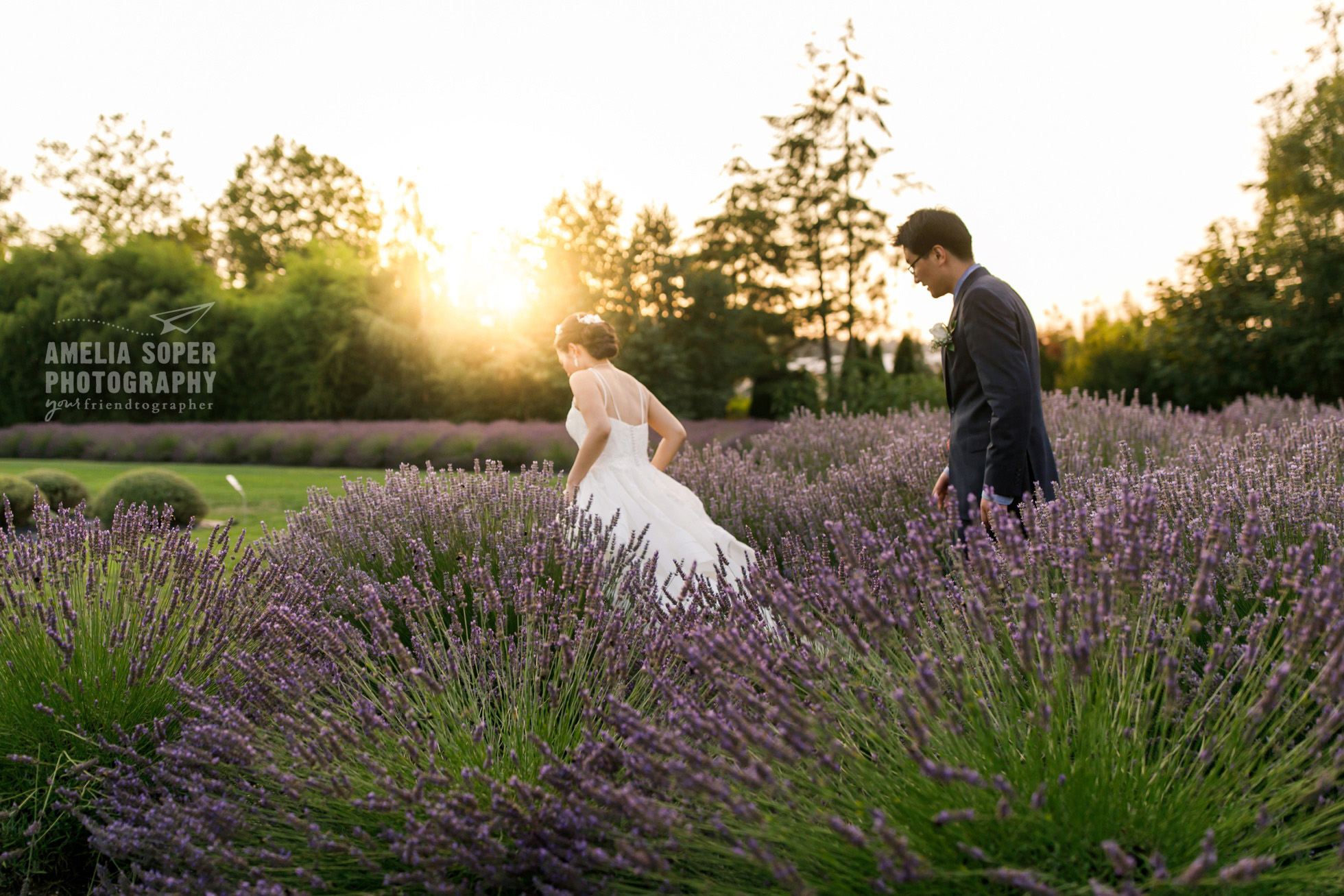 Woodinville Lavender Wedding, Couple in Lavender field