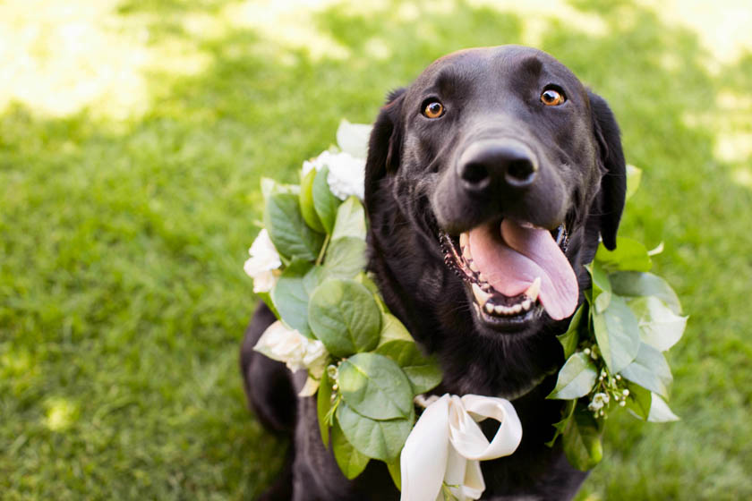 The best tips for including your dog in your wedding day. Click to learn more.