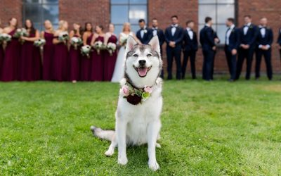 Carrie and Phil's Dog-Friendly Semiahmoo Resort Wedding